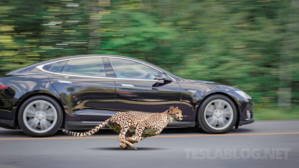 Tesla Model S Performance gets 0-60 mph in 2.3s with the cheetah stance update.